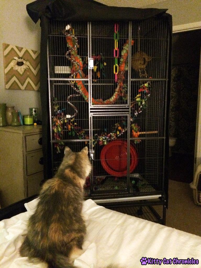Glider TV - cat watching sugar gliders