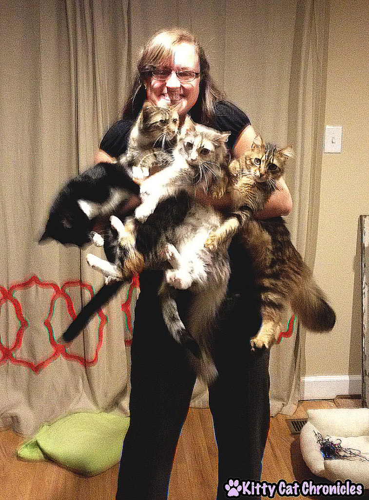 Hug Your Cat Day - hugging 4 cats