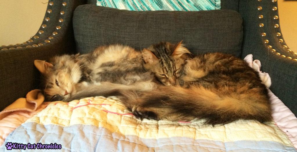 cats cuddling - Breaking Cuddles