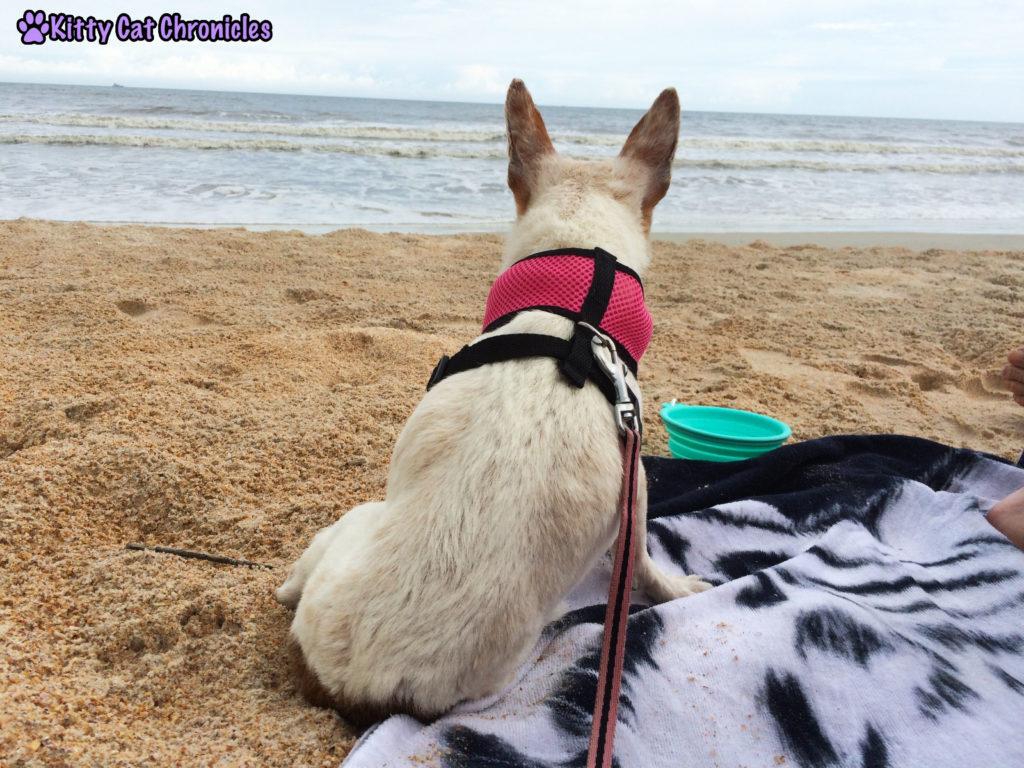 Lucy Dog on the Beach