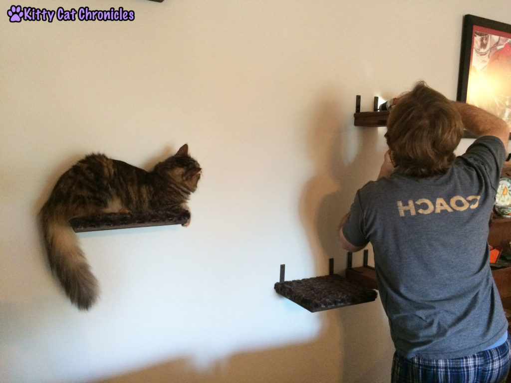 Caster Snoopervising Cat Wall Additions