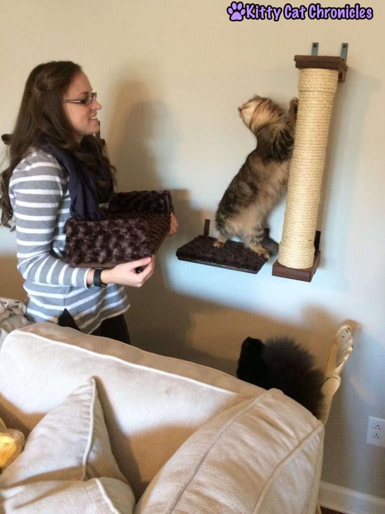 Caster Testing Out the First Cat Wall Addition