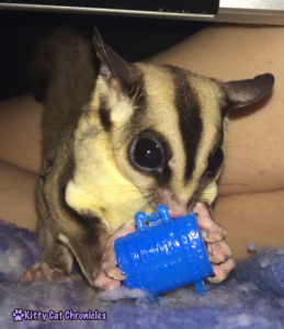 Jubilee Finds a Treat in the Treasure Chest