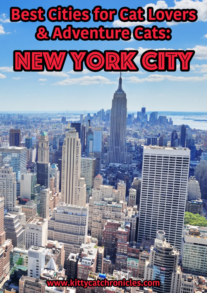 Best Cities for Cat Lovers & Adventure Cats: New York City