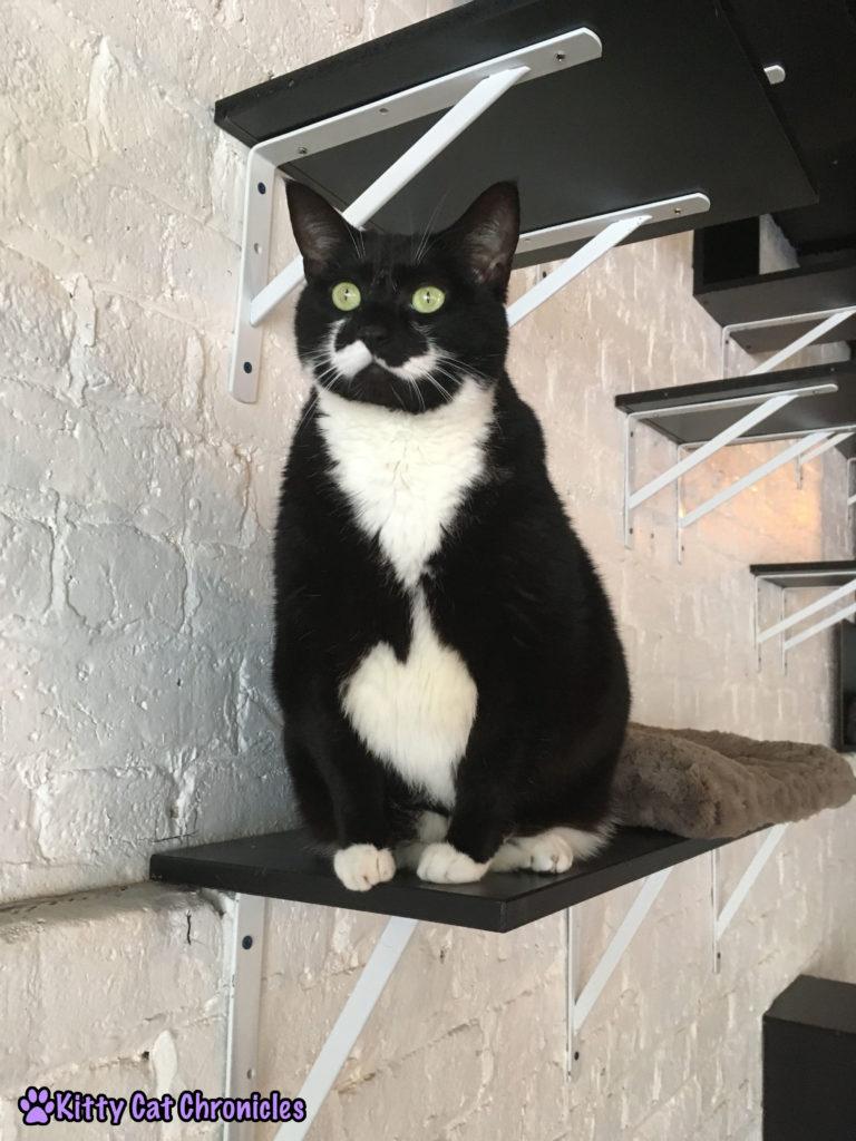 Pounce Cat Cafe - Bernice