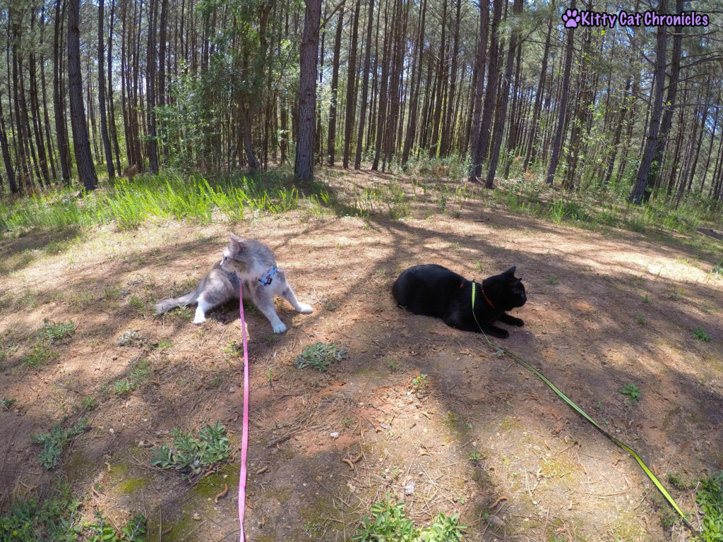 A Play-Date with Sophie & Yeezy | #WobblyWednesday