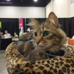 The Adventure Team Goes to BlogPaws - Caster in Cat Style Lounge