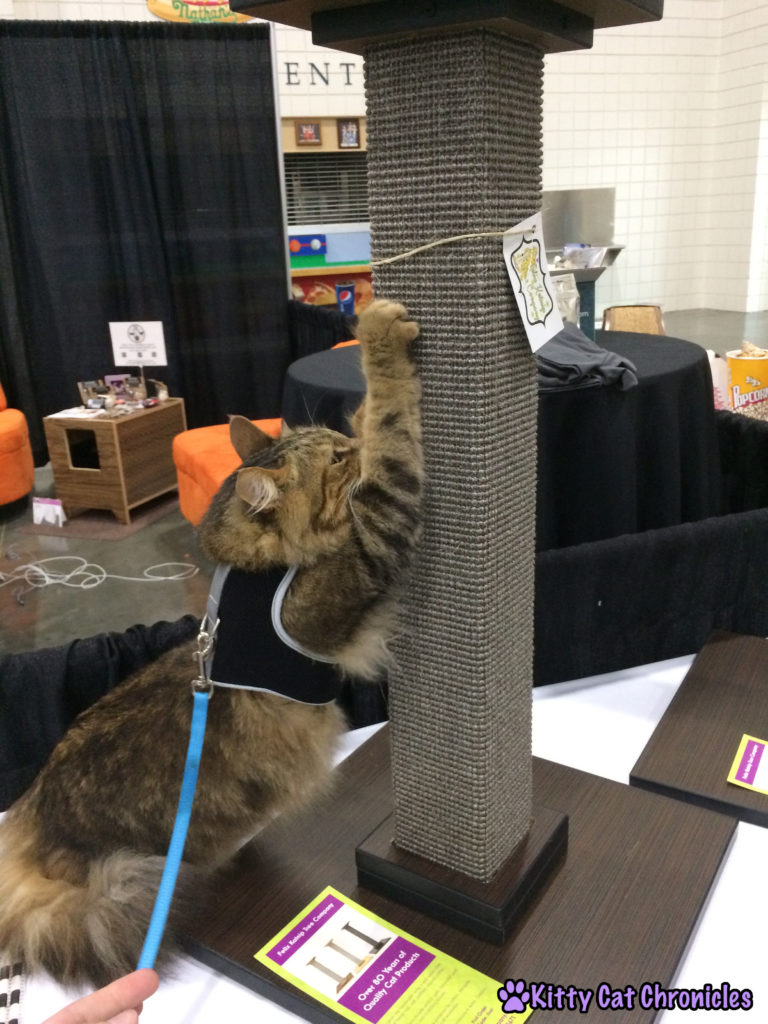 The Adventure Team Goes to BlogPaws - Caster in the Cat Style Lounge