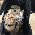 The Adventure Team Goes to BlogPaws - Caster & Sophie in Cat Stroller