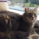 The Adventure Team Goes to BlogPaws - Caster in the Hotel Room