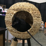 The Adventure Team Goes to BlogPaws - Kylo in Cat Style Lounge