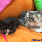 The Adventure Team Goes to BlogPaws - Sophie and Armani