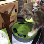 The Adventure Team Goes to BlogPaws - Sophie Playing in the Cat Style Lounge
