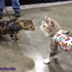 The Adventure Team Goes to BlogPaws - Sophie & Dexter