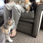 The Adventure Team Goes to BlogPaws - Sophie and Kittens