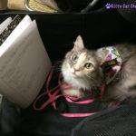 The Adventure Team Goes to BlogPaws - Sophie Taking Notes