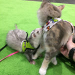 The Adventure Team Goes to BlogPaws - Sophie & SnotFace