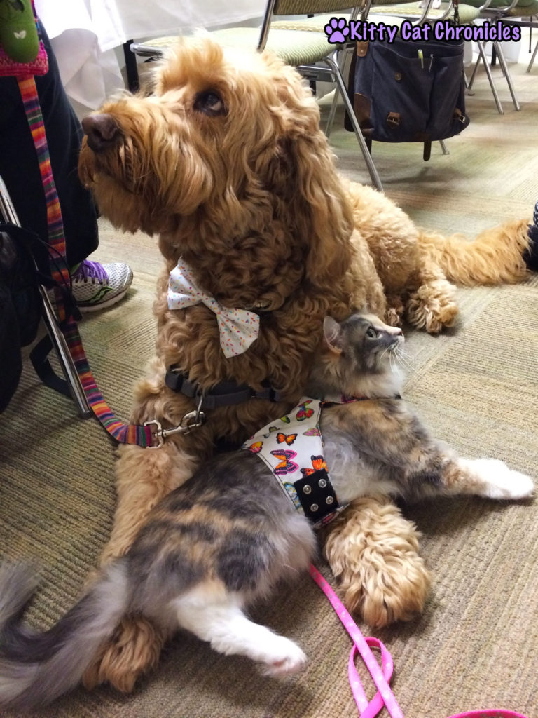 The Adventure Team Goes to BlogPaws - Sophie and Spencer