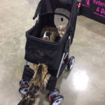 The Adventure Team Goes to BlogPaws - Dexter