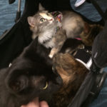 The Adventure Team Goes to BlogPaws - KCC Adventure Team in Cat Stroller