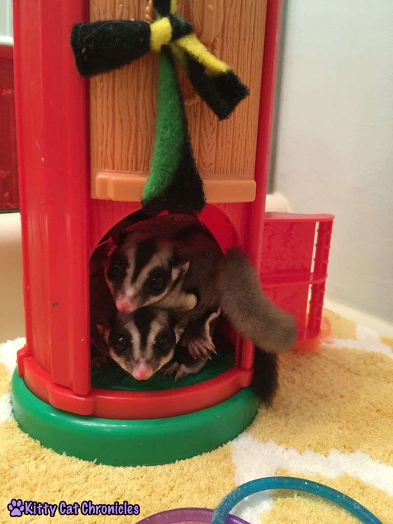 Funday Monday Update - Jubilee and Sydney the Sugar Gliders in their Silo