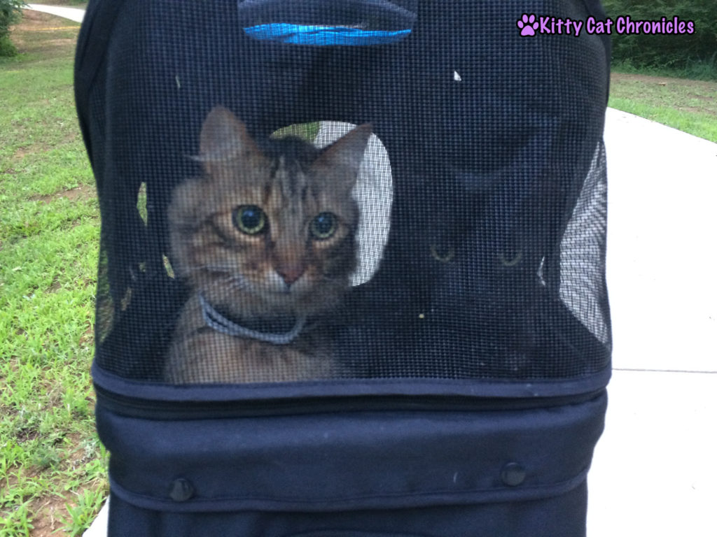 The KCC Adventure Team Date Night at Amerson River Park - cats in a stroller