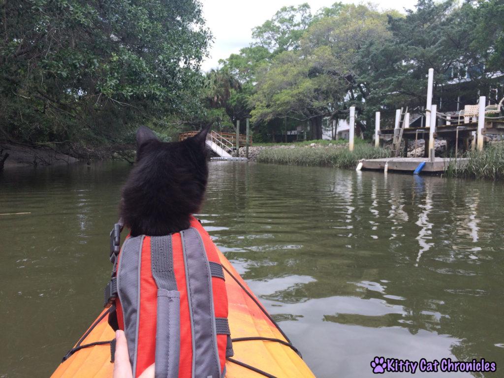 Our Third Charleston Adventure: Kayaking with Kylo Ren