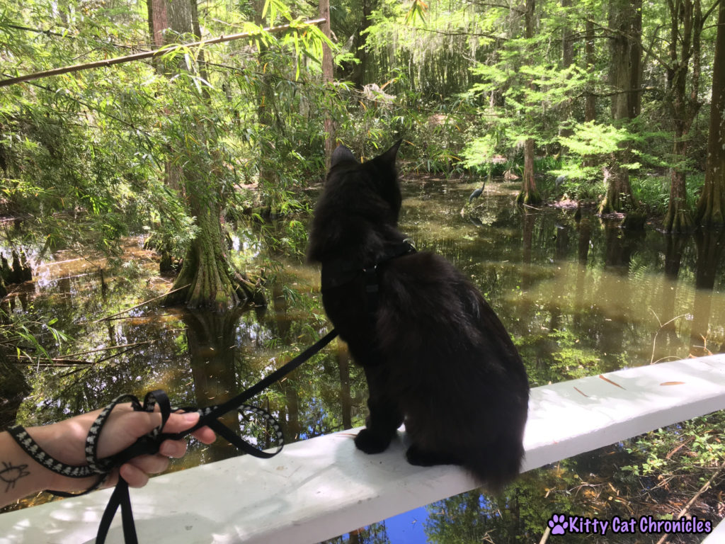 Our Second Charleston Adventure: Kylo Ren at Magnolia Plantation and Gardens