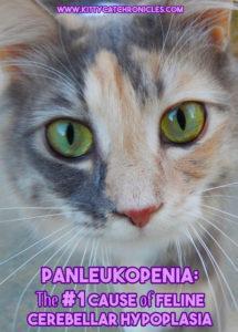 Panleukopenia: The #1 Cause of Feline Cerebellar Hypoplasia