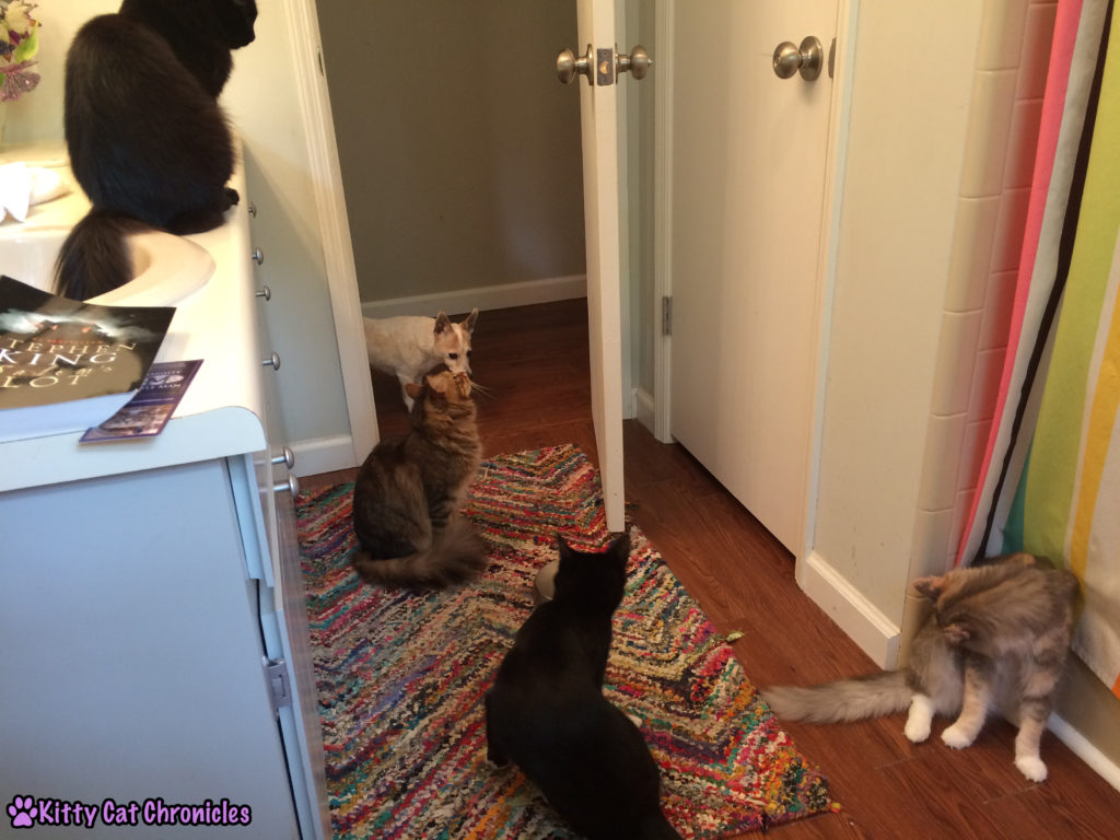 Does Anyone Else Have a Bathroom Audience? Cats in the Bathroom