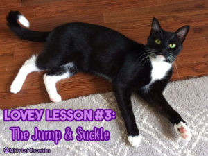 Lovey Lesson #3 with Sampson: The Jump & Suckle