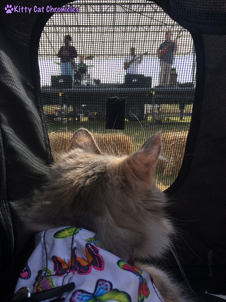 The KCC Adventure Team Continues Their Search for the Great Pumpkin at Lane Southern Orchards - Sophie listening to dad's band