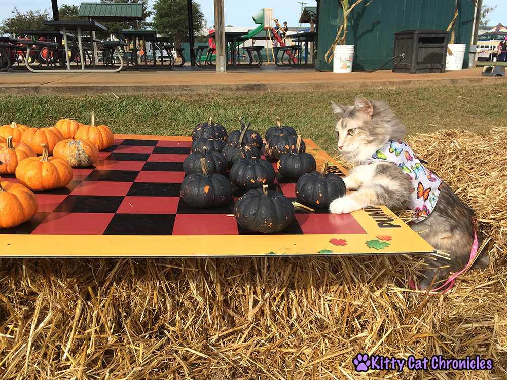 The KCC Adventure Team Continues Their Search for the Great Pumpkin at Lane Southern Orchards - Sophie playing Pumpkin Checkers