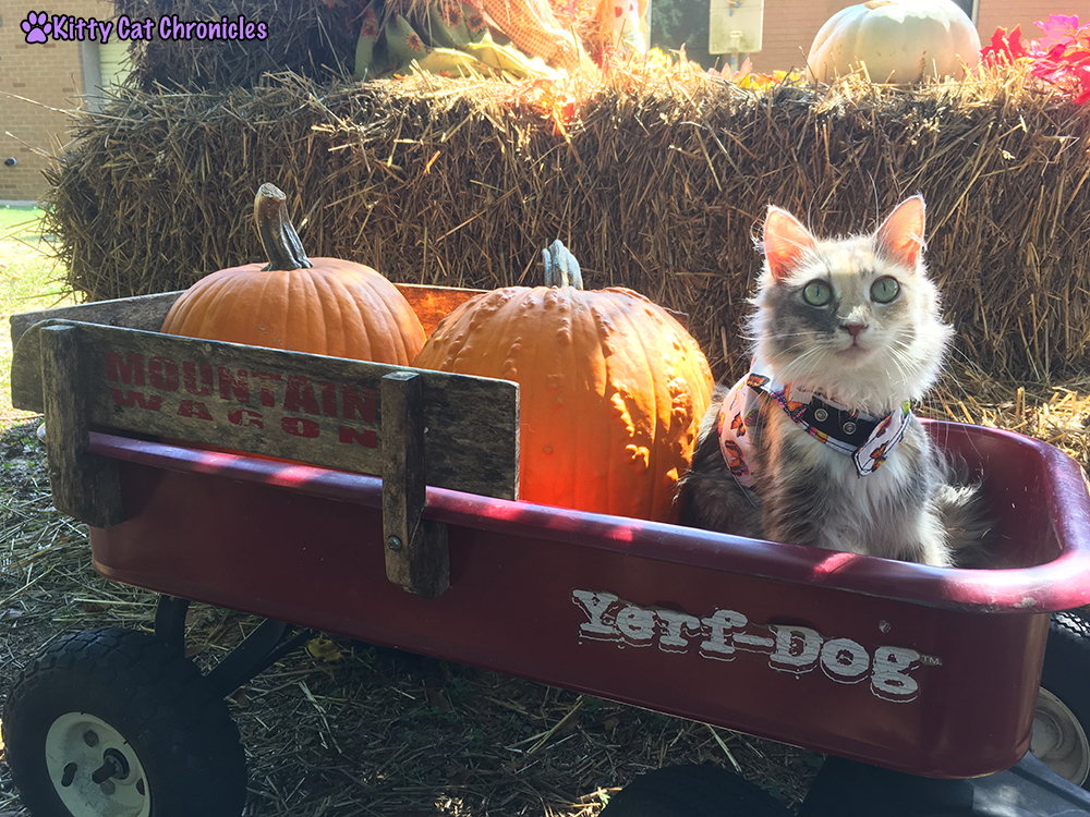 The KCC Adventure Team in Search of the Great Pumpkin - Sophie in Wagon