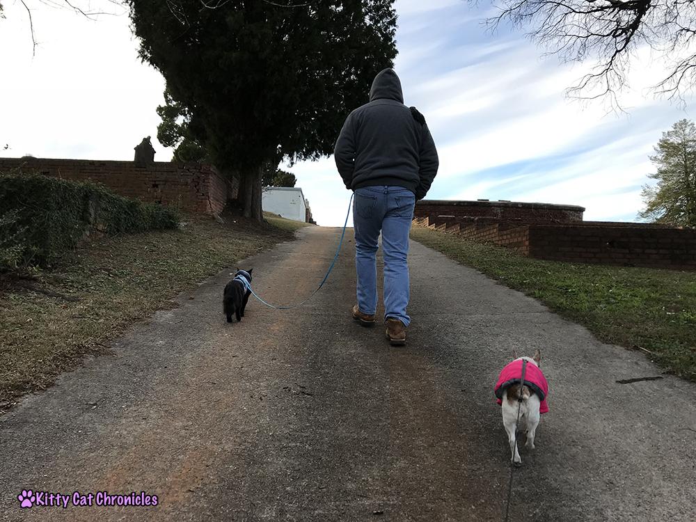 Kylo Ren Explores Rose Hill Cemetery