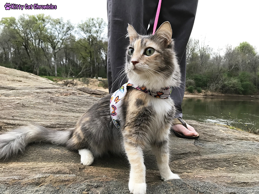 Down By the River with Sophie the CH Adventure Cat