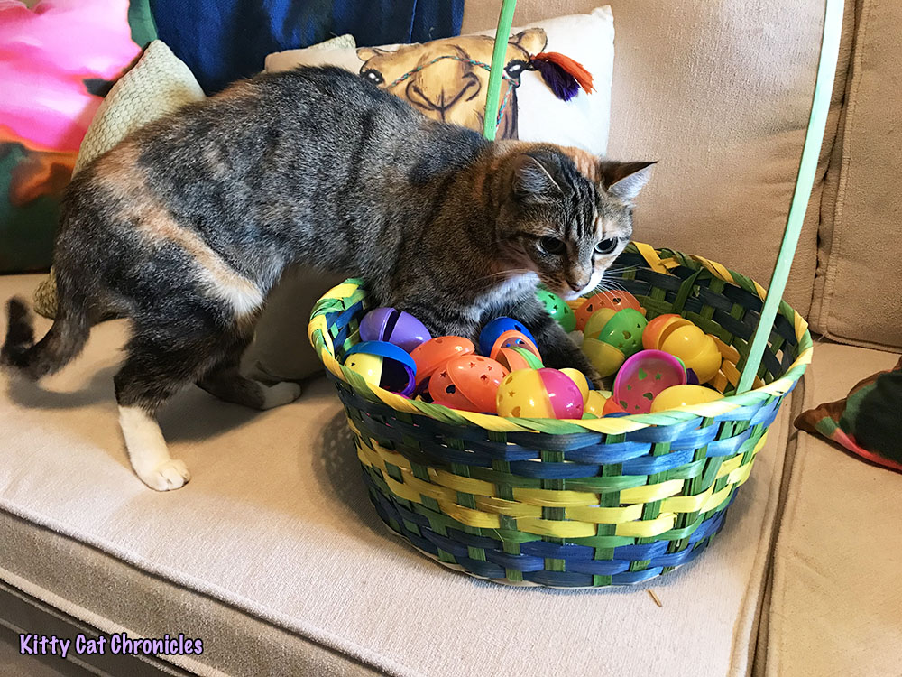 The 6th Annual KCC Easter Egg Hunt: And the Winner Is...