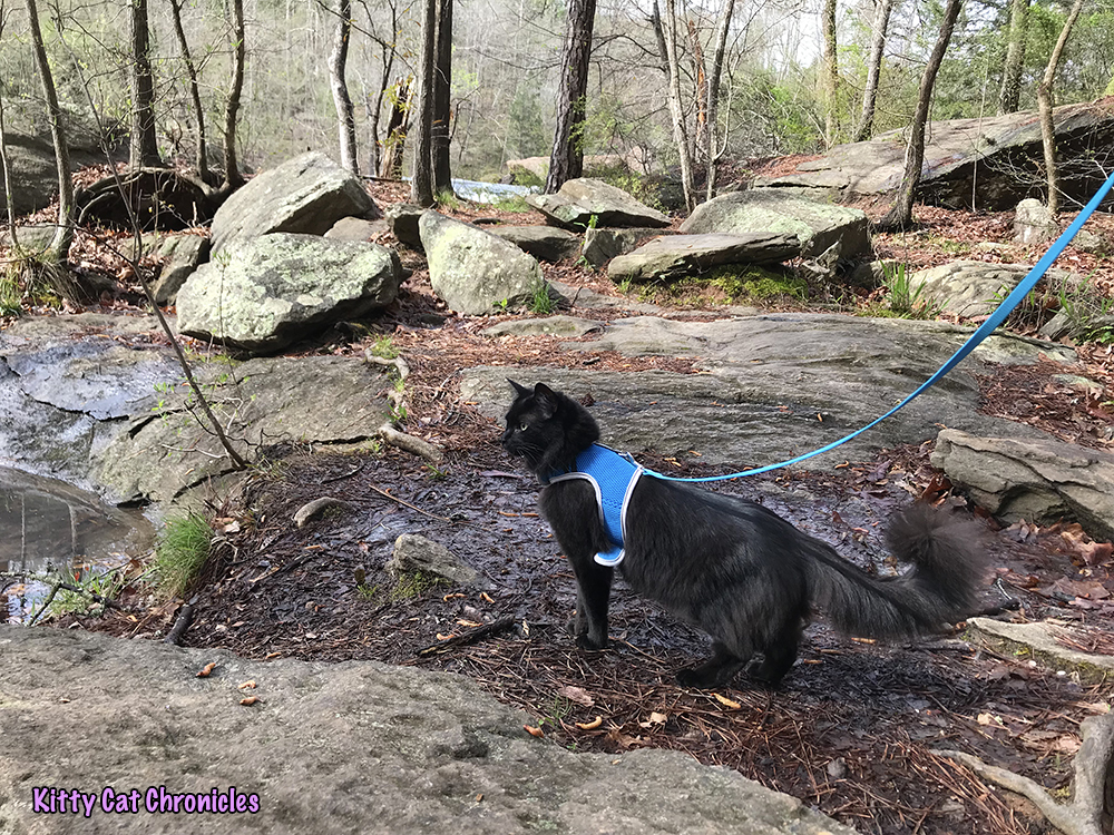 Hiking with Caster and Kylo Ren at High Falls State Park