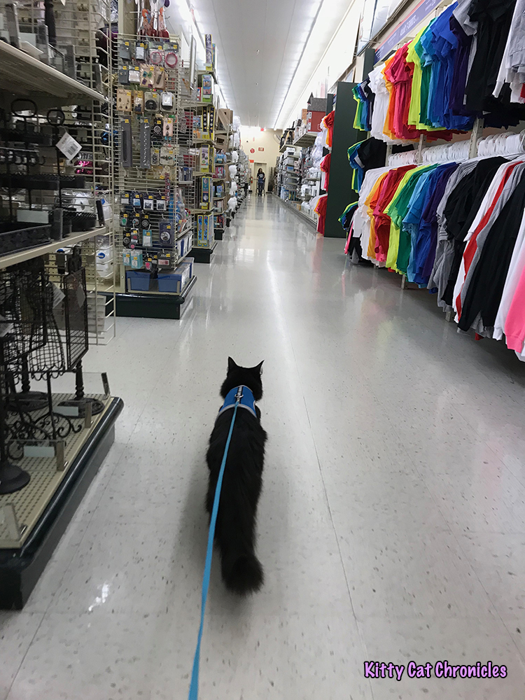 An Afternoon of Art and Reflection with Kylo Ren - cat at Hobby Lobby