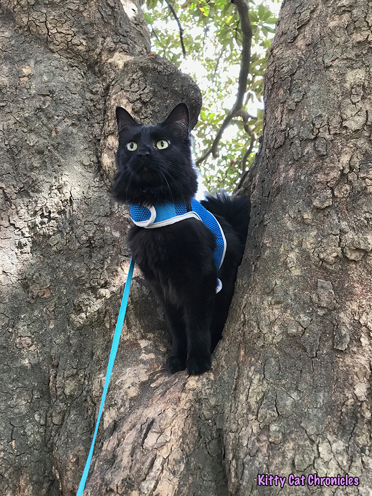 An Afternoon of Art and Reflection with Kylo Ren - cat in tree