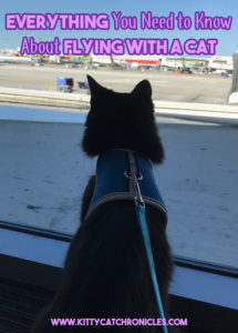 Everything You Need to Know About Flying with a Cat