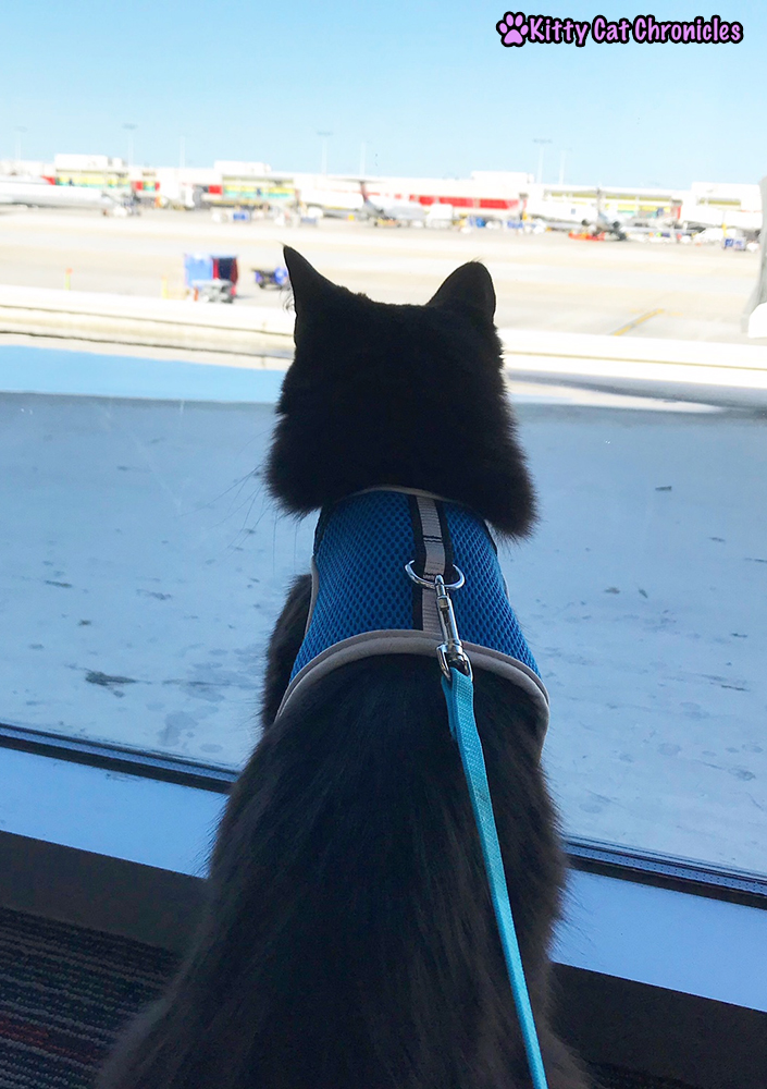 Everything You Need to Know About Flying with a Cat - cat at airport