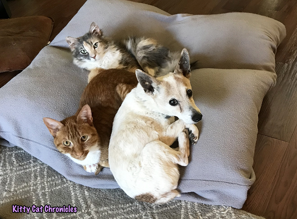 Wordless Wednesday: The Best Bed in the Universe