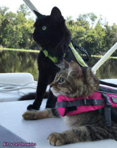 The KCC Adventure Team Tours the St. John's River & Silver Glen Springs - adventure cats on a boat
