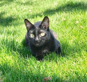 Mr. Wobbles - severe CH cat outside