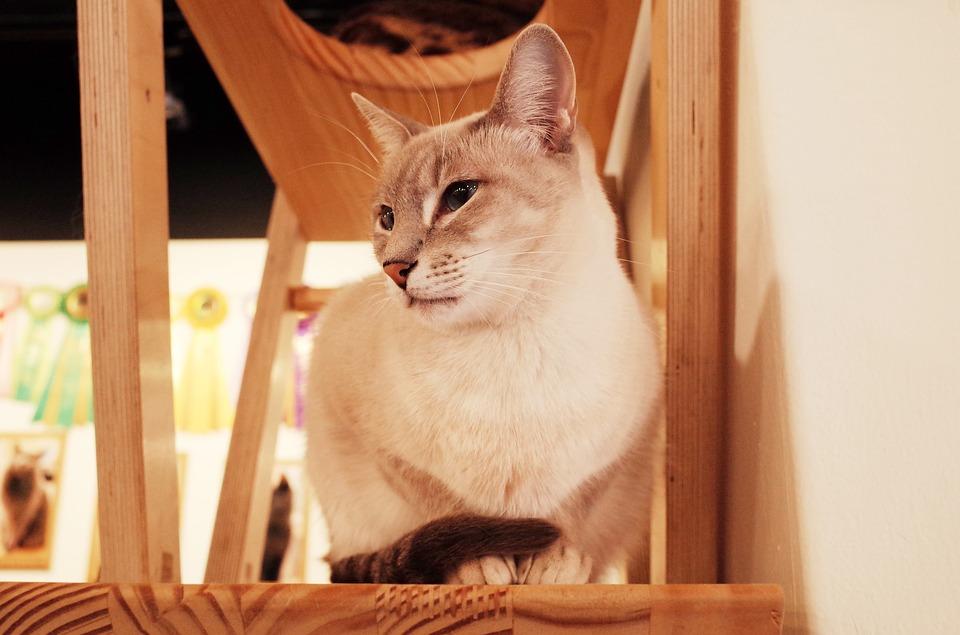 Adventure Cat Travel Guide: Savannah, GA - Cat Cafe