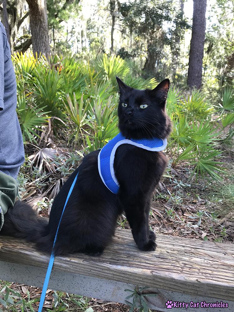 Savannah Explorations with Kylo Ren - Skidaway Island State Park