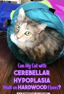 Can My Cerebellar Hypoplasia Cat Walk on Hardwood Floors?