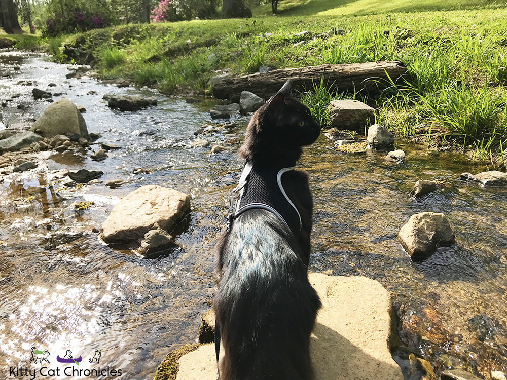 A Visit to Jackson Spring Park with Sophie and Kylo Ren