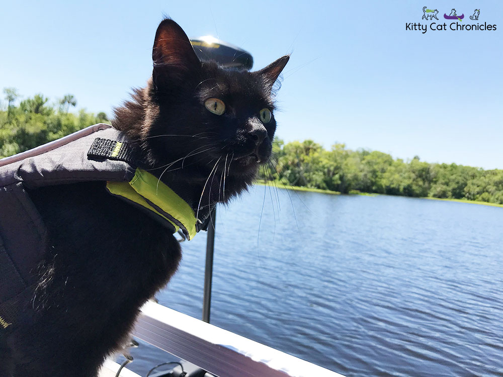 Kylo Ren and the 3-Hour Boat Tour - cat on a boat